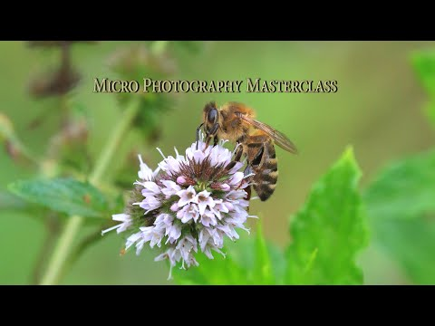 Wildlife Photography Filming:  Micro Masterclass