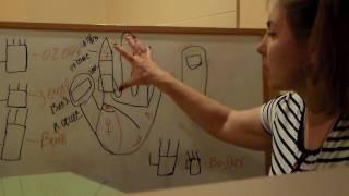 Уроки Хиромантии. Форма рук 3