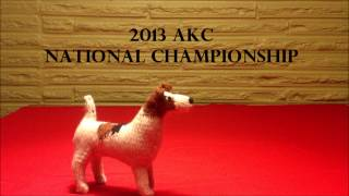 2013 Knitted Dog National Championship.wmv