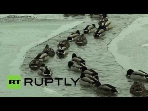 Canada: Polar Bear dippers freeze for new library
