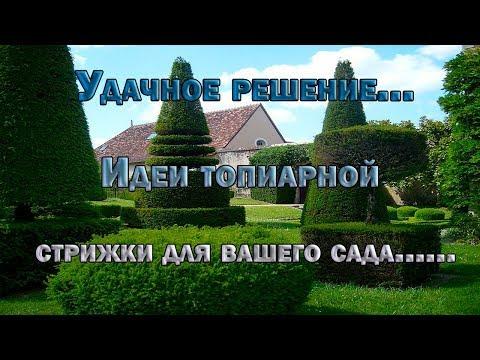 Удачное решение ...   Идеи топиарной стрижки для вашего сада...