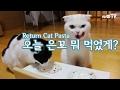 [은호,고야] 고양이를 위한 파스타를 만들자! #2 Make Pasta For Cats 猫にパスタを作ってあげよう
