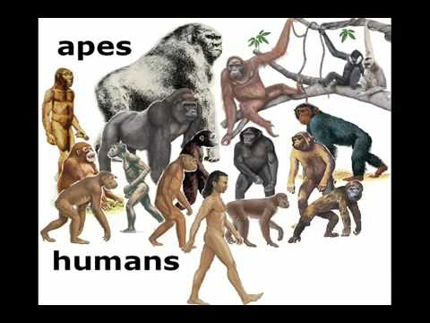 Human evolution did we come from monkeys youtube for Did humans evolve from fish