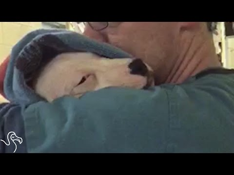 Scared Dog Comforted By Singing Man