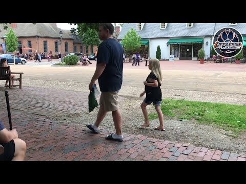 Mixed Breed, Wilson | Mix Dog Training | Off Leash K9