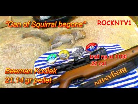 Beeman Kodiak Pellets Air Rifle Hunting Squirrel
