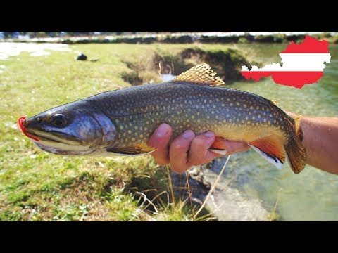 Fly Fishing For Brook Trout In Austria