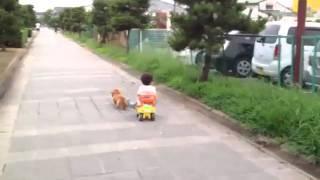 愛犬が息子を引いて元気に走っています(≧∇≦)