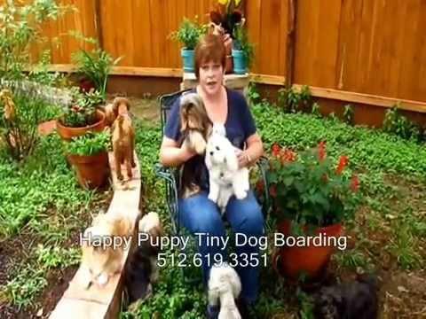 Happy Puppy Tiny Dog Boarding-North Austin Texas
