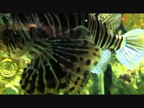 Exploris the northern ireland aquarium Portaferry