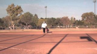 Retriever Training Lining Baseball Drills (part 2)