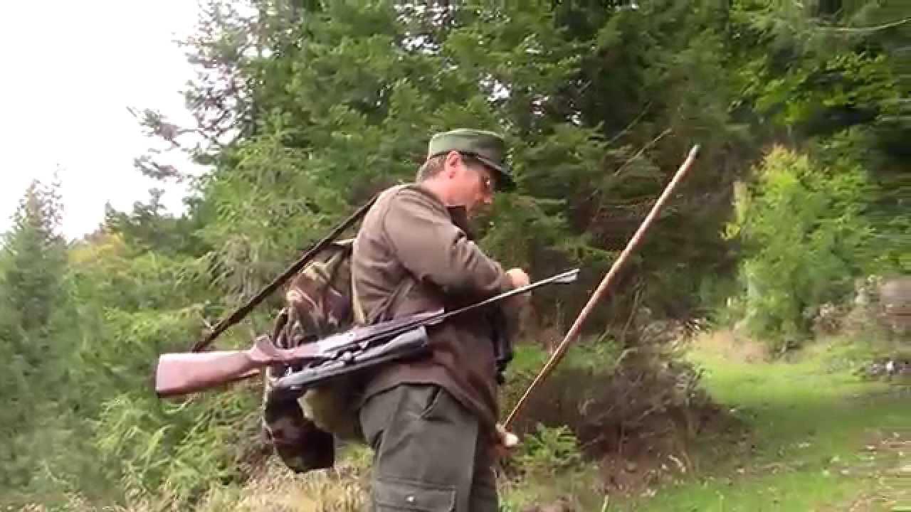 caccia al cervo sito di incontri