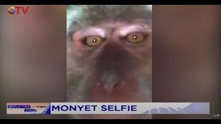 Aksi Seekor Monyet Masuk Rumah dan Curi Ponsel Tinggalkan Jejak Video Selfie - BIP 19/09