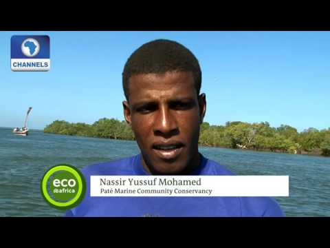 Eco@Africa: Over Fishing Depletes Fish Stock In Kenya