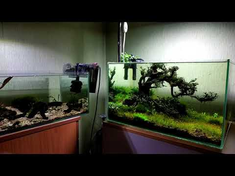 Что будет если отключить фильтр в аквариуме на две недели...