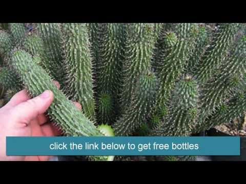 hoodia-to-lose-weight