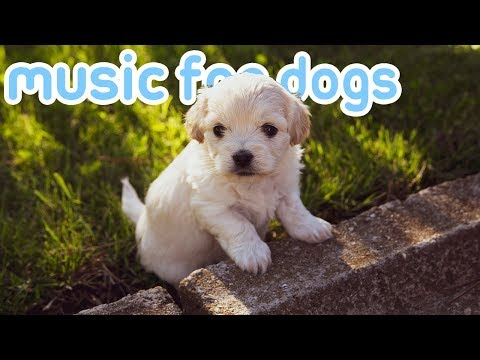 15 HOURS Of Soothing Deep Relaxation Music For Dogs! NEW 2019!