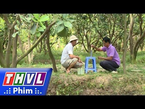 THVL | Khoa học nông nghiệp: Giải pháp bảo vệ vườn cây ăn trái trong điều  kiện hạn, mặn