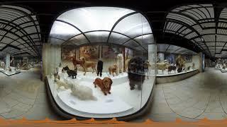 Панорамное видео 360 видео тур по Дарвиновскому музею обучение экскурсия в виртуальной реальности