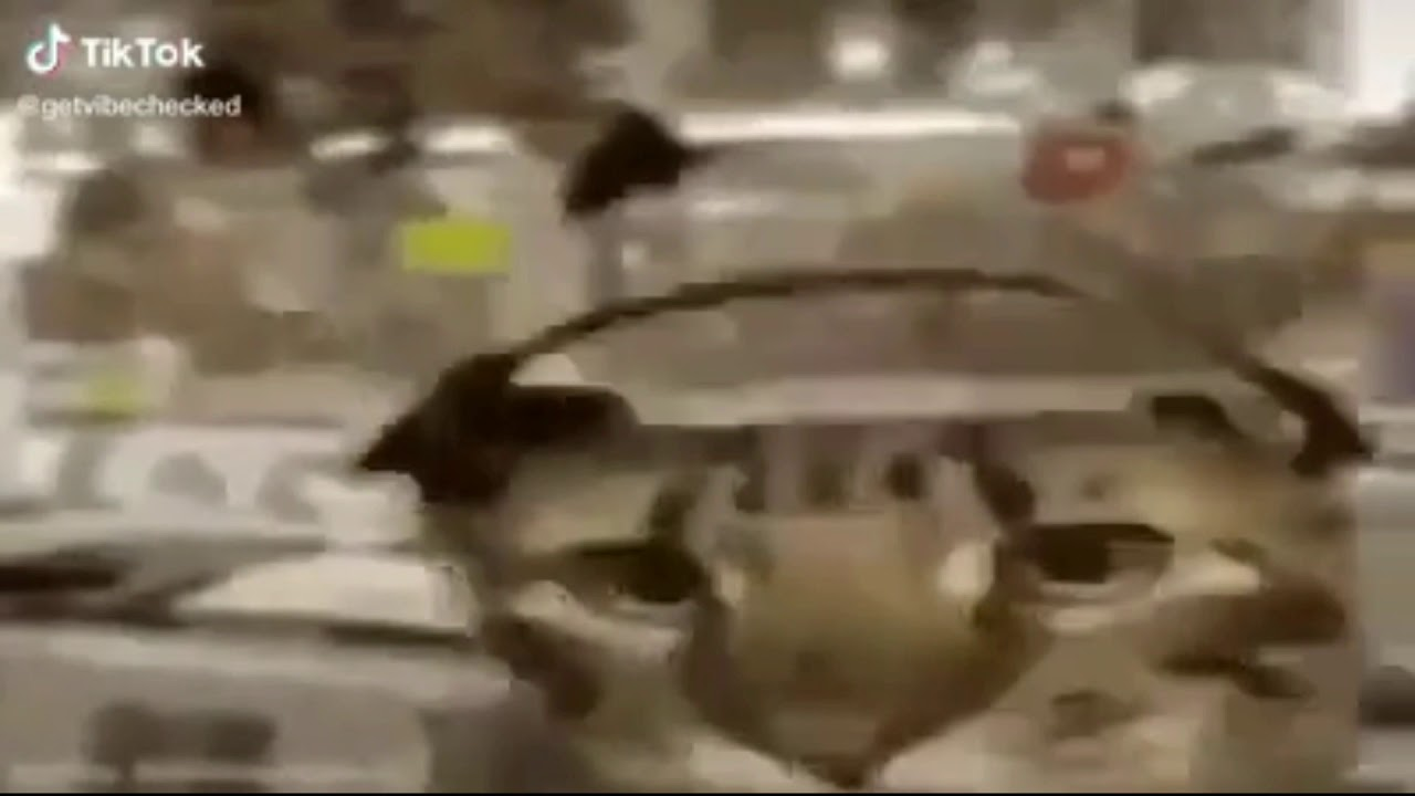 кот танцует тик ток