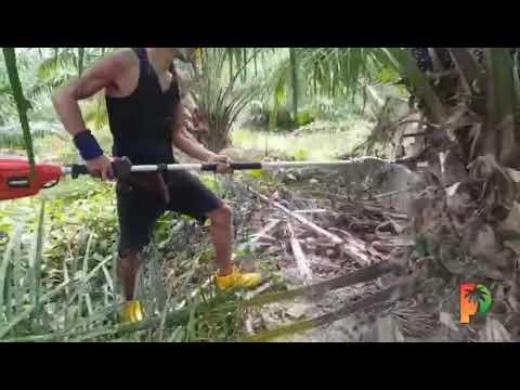 E-Cutter in Palm Oil Operations 2 油棕榈切割机