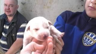 Собака Стрелка и ее  щенки ))))