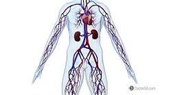 hqdefault - Qc Kidney Center Moline Il