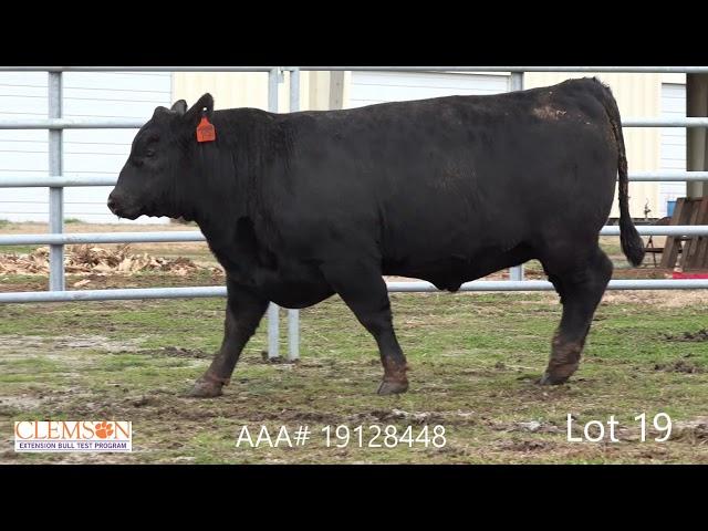 Clemson Extension Bull Test Lot 19