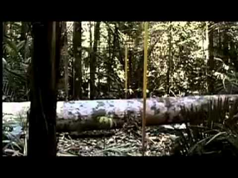 Buy the Good Wood - The Story of FSC