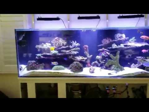 My 180 gallon saltwater reef tank after 3 months **work in progress**