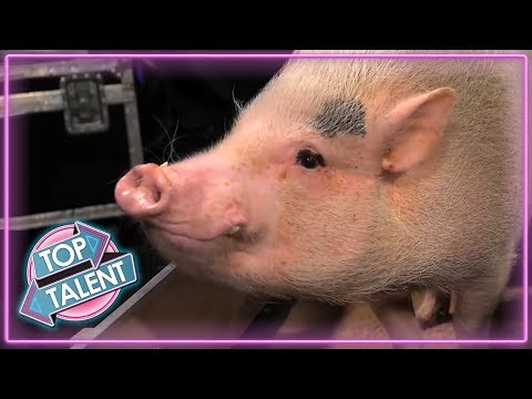 ANIMALS GOT TALENT! Intelligent Animals From Around The World! | Top Talent