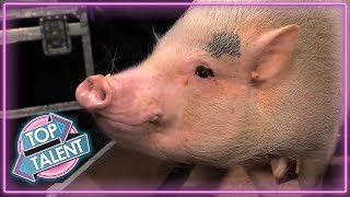 Download ANIMALS GOT TALENT! Intelligent Animals From Around The World! | Top Talent Mp3 and Videos