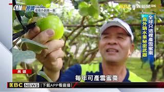 銷新加坡蜜棗大如蘋果 韓國瑜笑:可K沈玉琳