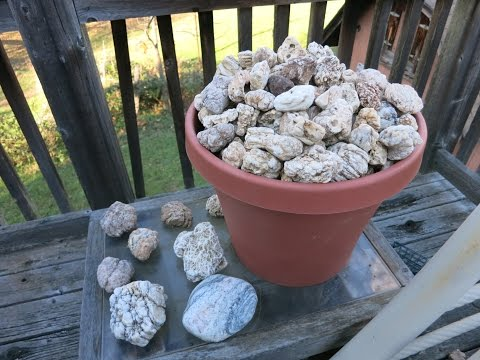 Geode hunting in my yard. Rock hunter