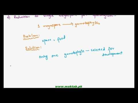 FSc Biology Book1, CH 9, LEC 13: Evolution of Seed