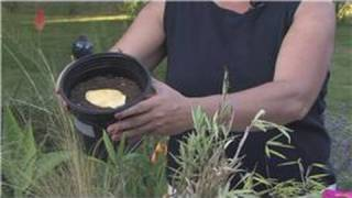 growing plants from seeds how to grow a mango from the seed