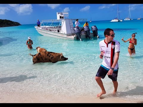 Exuma - Bahamas | February 2018 | Swimming pigs, sharks and more