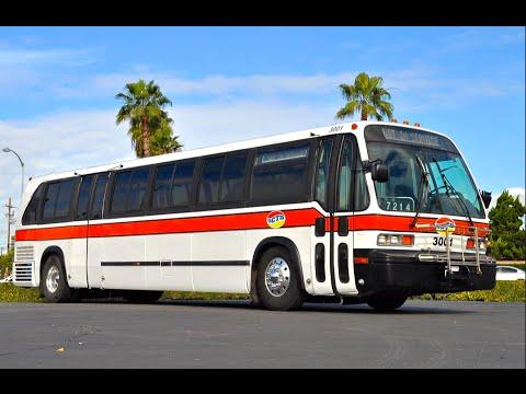Bus Galore!