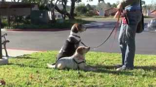 San Diego Dog Training: Obedience Training / Behavior Modification / Behavior Therapy