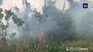 إشعال النار لزارعة الأرز يهدد الأمازون - (2-9-2019)