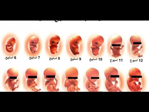 مراحل نمو الجنين في بطن أمه بالأشهر Youtube
