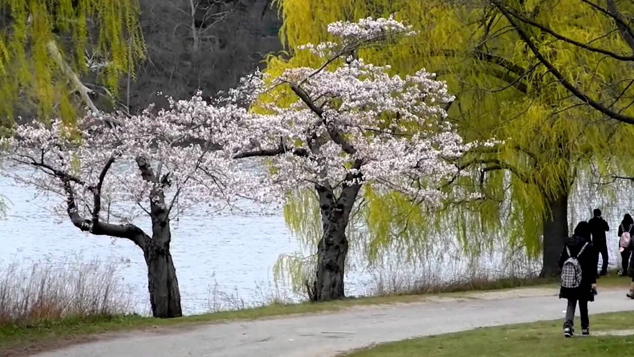 Happy Spring Flowering Trees Blooming Trees In Happy Spring Youtube