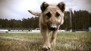 Собака мешает начать игру   Pretty dog interferes a football match