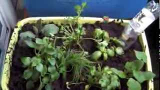 How to Make a Self-Watering Container Garden