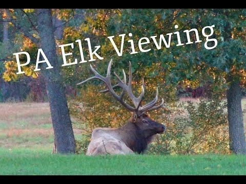 2016 PA Elk Viewing/ BIG BULL ELK