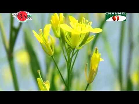 Nature and Life   Episode 77 Char Lands of Bangladesh