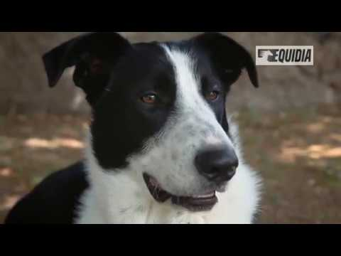 Parler Avec Les Animaux - Docummentaire Français - Communication Animale