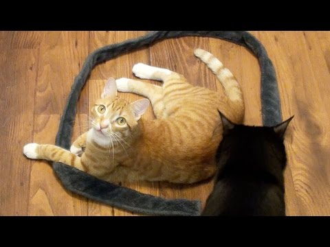 How to Trap a Cat - CAT CIRCLES!