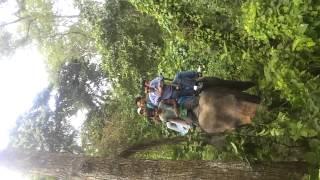 chatwan sauraha hatti safari