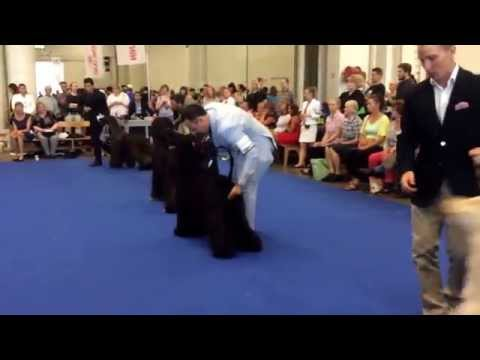 World Dog Show 2014 Helsinki, afghan hound champion class
